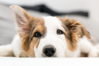 Der Wau-Effekt: Warum ein Hund Ihrem Betrieb guttun könnte
